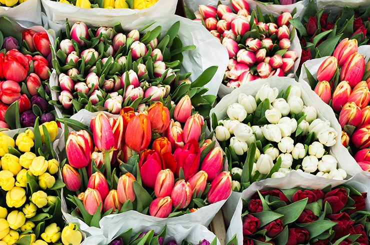 Более 18 млн цветов привезли в Новосибирскую область к 8 Марта
