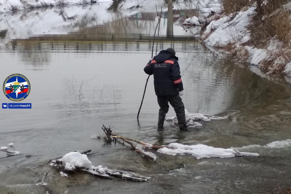 Новосибирцы жалуются на бобров, которые хотят затопить город