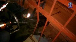 Застрявшего на балконе пса спасли новосибирские спасатели