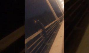 Спасатели сняли новосибирца с Бугринского моста