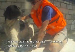 """На помощь тонущей собаке пришли новосибирские спасатели """"МАСС"""""""