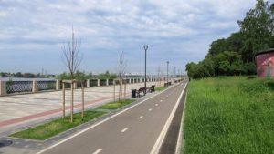 Немецкие яблони «Рудольф» не прижились на набережной Новосибирска