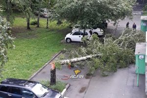 Буря в Новосибирске: ветер повалил деревья на машины