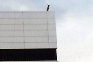 В Новосибирске заперли собаку на крыше высотки
