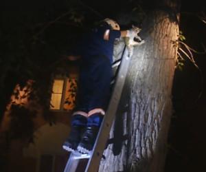 Спасатели МАСС в Новосибирске сняли с дерева маленького котёнка за 45 секунд