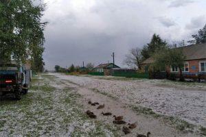 Град с куриное яйцо повредил дома и урожай в Новосибирской области