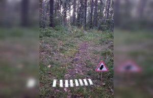В Академгородке для новосибирских ежей сделали пешеходный переход