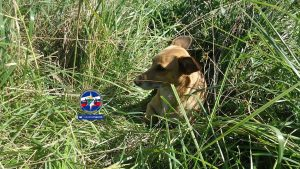Собака устроила догонялки со спасателями в коллекторе