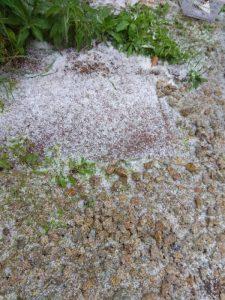 В Новосибирске выпала снежная крупа