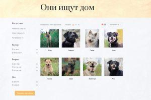В Новосибирске открылся бесплатный интернет-магазин бездомных псов