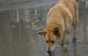 Спасатели Бердска достали из колодца крупную собаку
