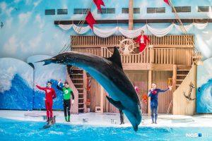 Новосибирский дельфинарий начал проводить новогодние корпоративы