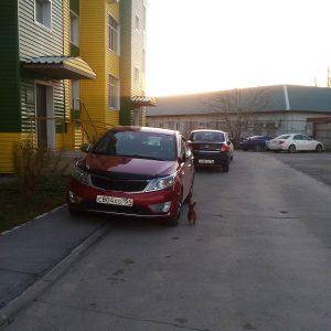 «Я паркуюсь как чудак»: новосибирцы заметили Lexus у инвалидного знака