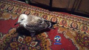 Спасатели МАСС нашли на льду любопытного птенца чайки