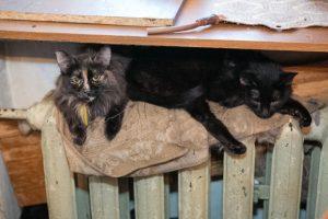 Жительница Новосибирска развела в квартире почти 40 кошек и уехала