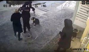 Новосибирск: на хозяев собаки завели дело после ссоры с полицейским