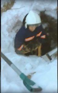 Спасатели МАСС достали собаку из заброшенного погреба в Новосибирске