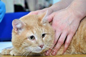 «День хвоста»: новосибирцы разобрали 15 бездомных кошек