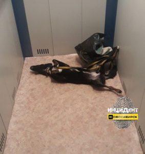 Новосибирск: в лифте дома на Затулинке нашли задушенную собаку с игрушками