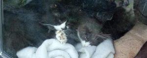 Тюрьму для кошек устроил житель Бердска в своей машине