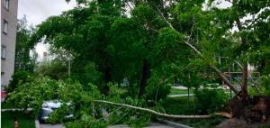 В Новосибирске упавшее дерево повредило машину и перегородило проезд во дворы