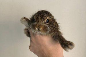 Новосибирские волонтеры из ЦРДЖ выкармливают крошечного зайчонка