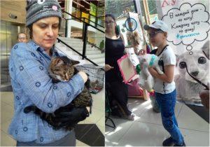 """""""День хвоста"""": бездомные котики ищут хозяев в Новосибирске"""