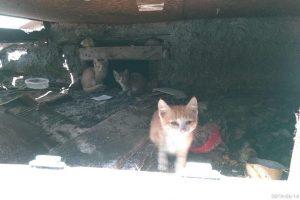 В Новосибирске убили кошку - горожане хотят забрать себе котят