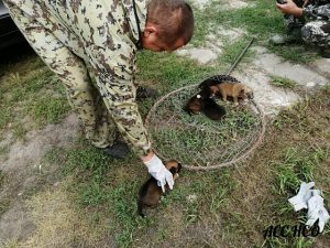 Куйбышевские спасатели вытащили из трубы маленьких щенков