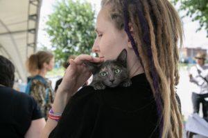 «День хвоста» - новосибирцы разобрали бездомных кошек и собак