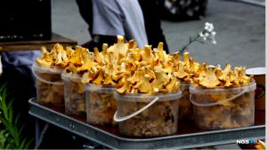 Грибы-лисички появились на улицах Новосибирска