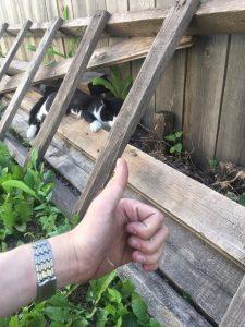 Новосибирец спас кота, упавшего с балкона