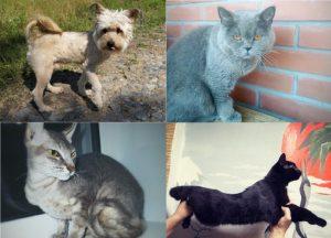 В «День хвоста» породистые и бездомные котики найдут хозяев