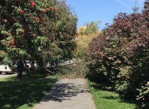 В Новосибирске сильный ветер повалил деревья