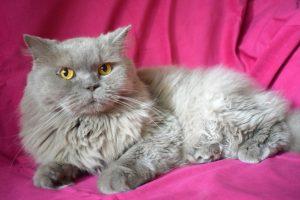 В Новосибирске прошла выставка котиков с тяжёлой судьбой