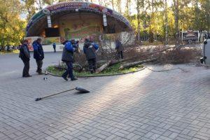 Власти Новосибирска спилили засохшие ели в парке «Берёзовая роща»