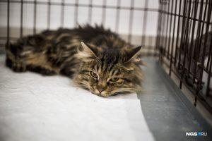 """""""День хвоста"""": в Новосибирске нашли дом 10 котов с тяжелой судьбой"""