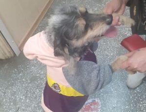 На ОбьГЭСе нашли украденную собачью куртку