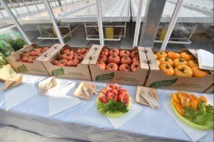 Новосибирцы будет обеспечены местными овощами