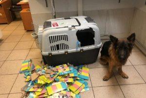 В авиалайнере S7 собака новосибирского депутата вырвалась из клетки