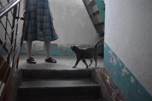 Журналисты спасли кошачью семью из квартиры убитой отчимом Даши