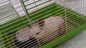В Новосибирске трёхмесячного кролика в железной клетке выкинули на помойку