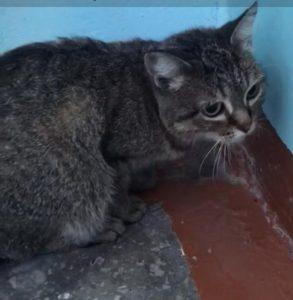 Кошка спаслась от холода в новосибирской электричке