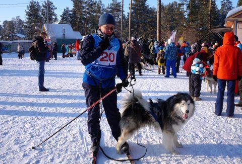 Гонки на собачьих упряжках прошли в Бердске