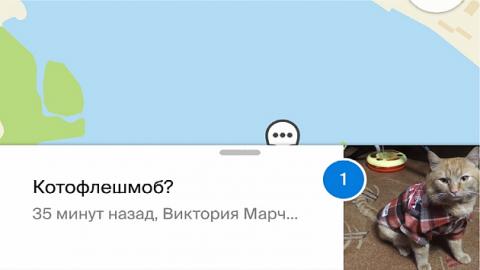 Новосибирцы устроили котофлешмоб на карте города