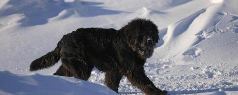МАСС спасла собаку, застрявшую на острове в Новосибирске