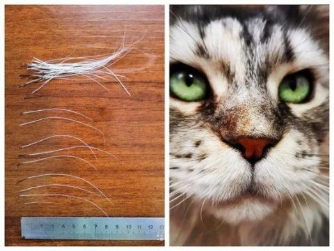 Жительница Новосибирска продает коллекцию кошачьих усов