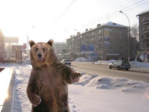 В новосибирской области по улице гуляет медведь