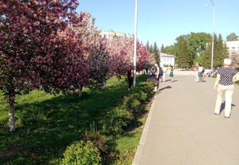 В городском парке Бердска спилят почти все деревья