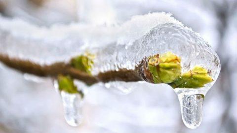 В середине недели в Новосибирске начнется оттепель